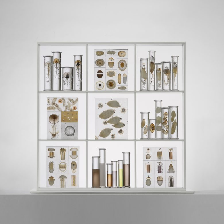 Cabinet of curiosities. 2011 h: 100 cm.