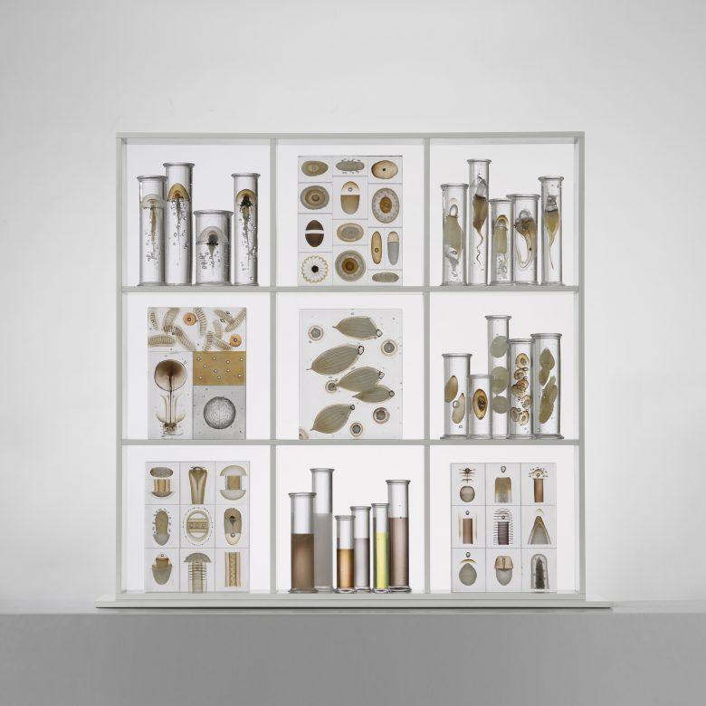 Cabinet of curiosities. 2011 h: 100 cm.